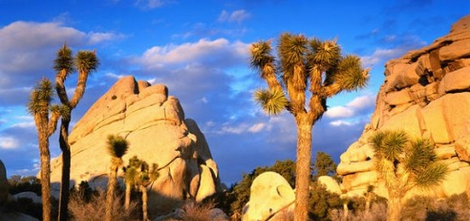 Welcome to Joshua Tree National Park