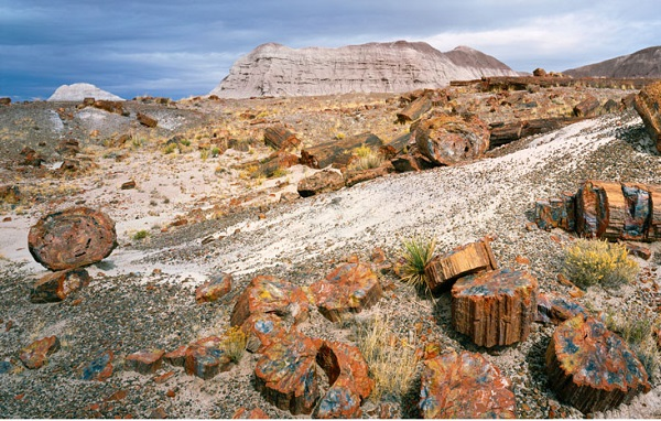 Welcome to Petrified Forest National Park