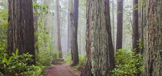 Welcome to Redwood National Park