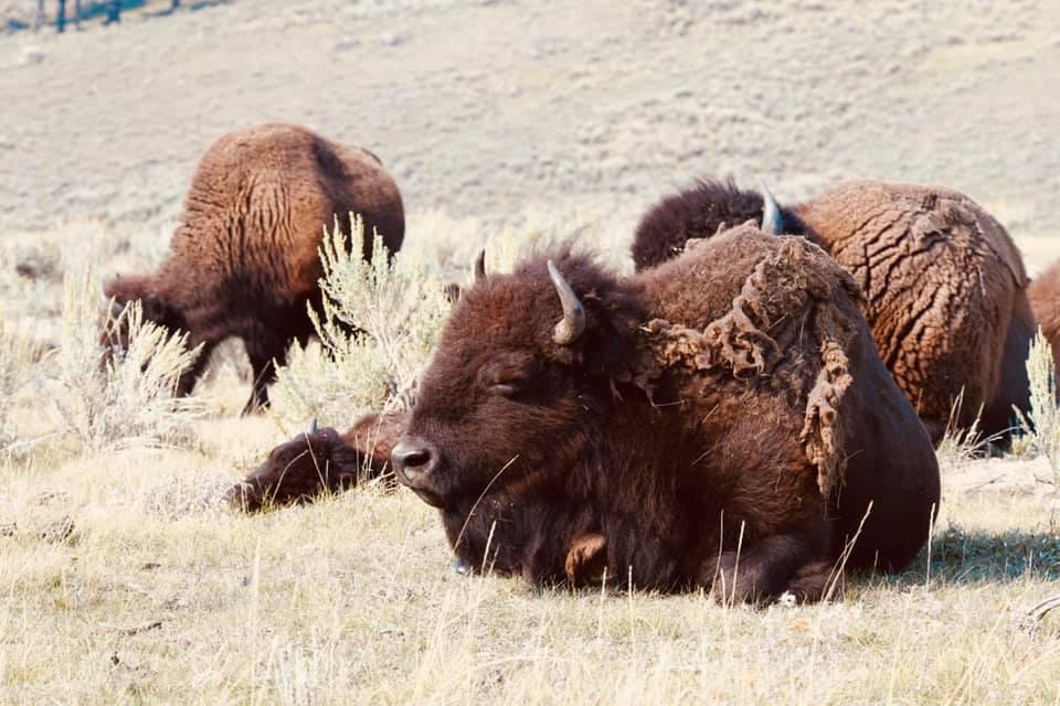 Yellowstone National Park photo 5